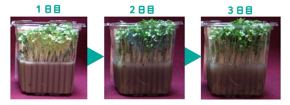 植物も育つ歯磨き粉